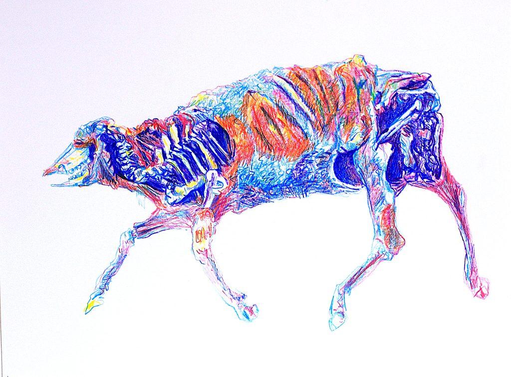 cadavre vache