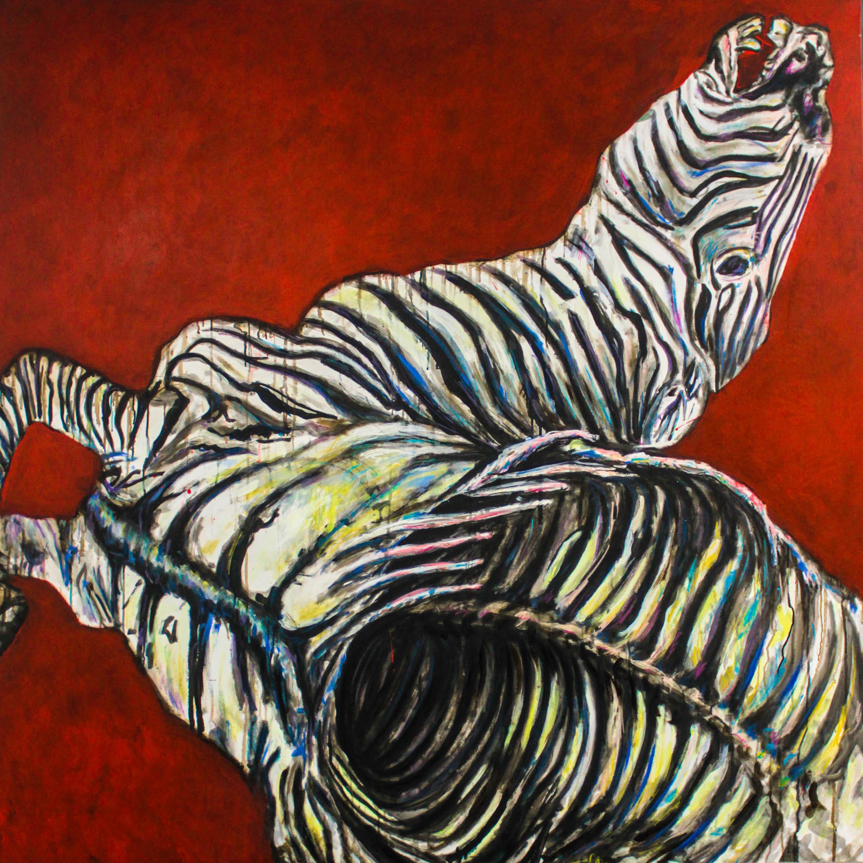 zebra equus
